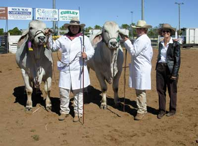 Trish Pearson (right), Bull Creek, McKinlay sashed the Junior Champion Bull Elrose Preston held by Claire Britton and the Reserve Junior Champion Bull, Elrose Birdseye held by Brook Jefferis